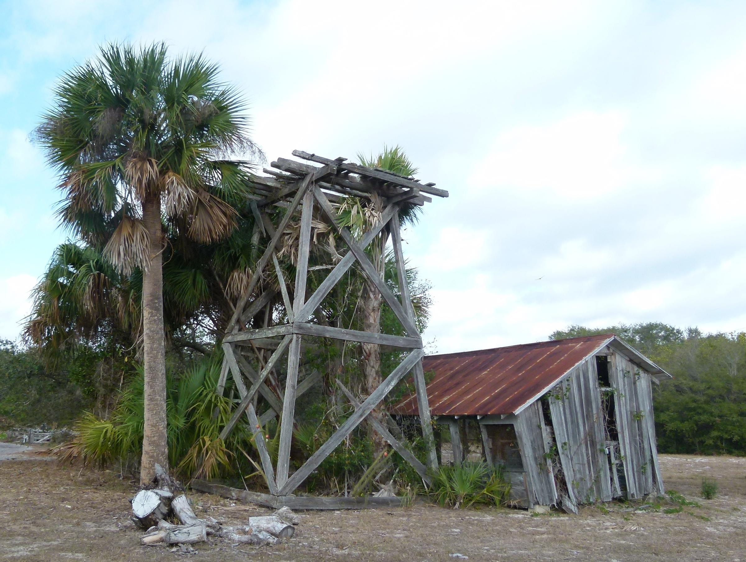 growing Treasure Coast Florida  - oldendaze | ello