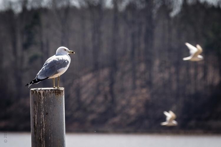 Seagulls Lake - wadesword | ello