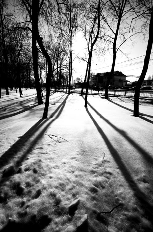 Follow sun! Municipal Park, Rom - andreimarius | ello