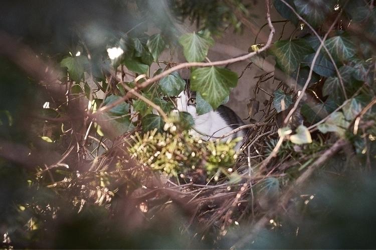Eye tiger ;) photography cats - bartekbuzuk | ello