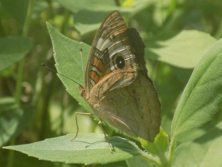 Butterfly - mindy2886 | ello