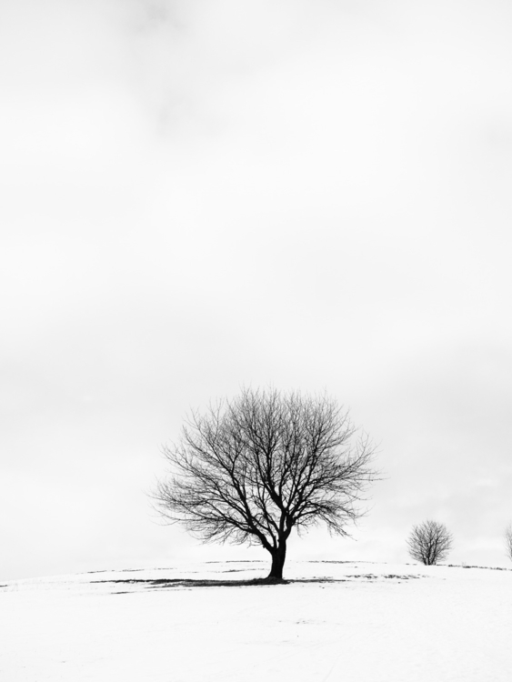 Tree blackforest germany monoch - alopecosa | ello