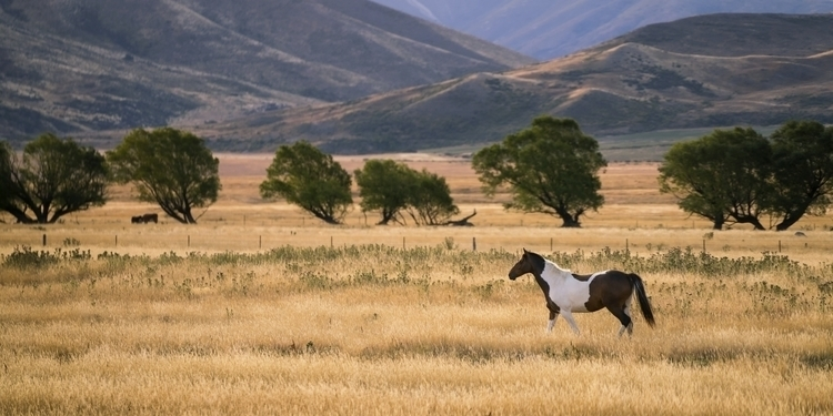 Summer Pony beautiful location  - ianriddler | ello