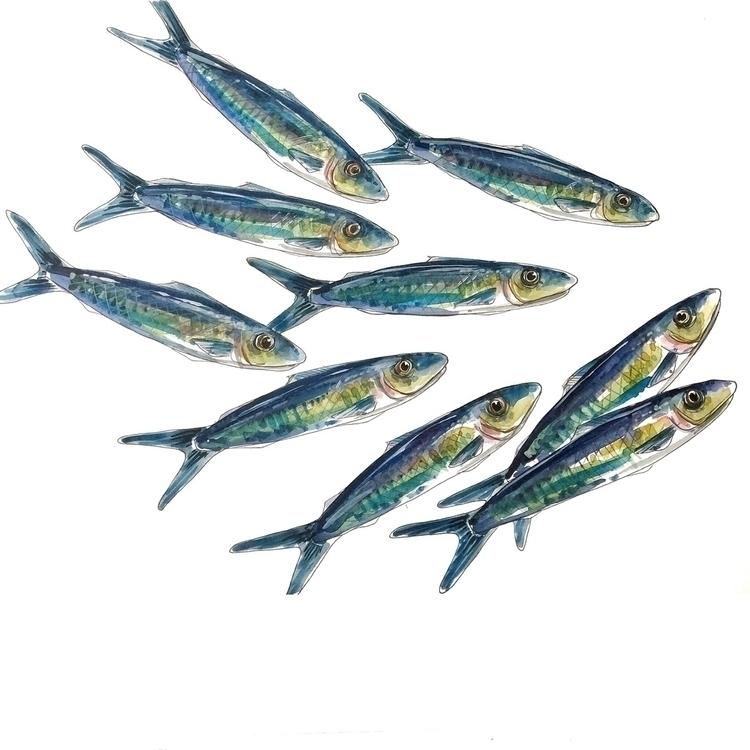 design fish nautical colour pat - aliellydesign   ello