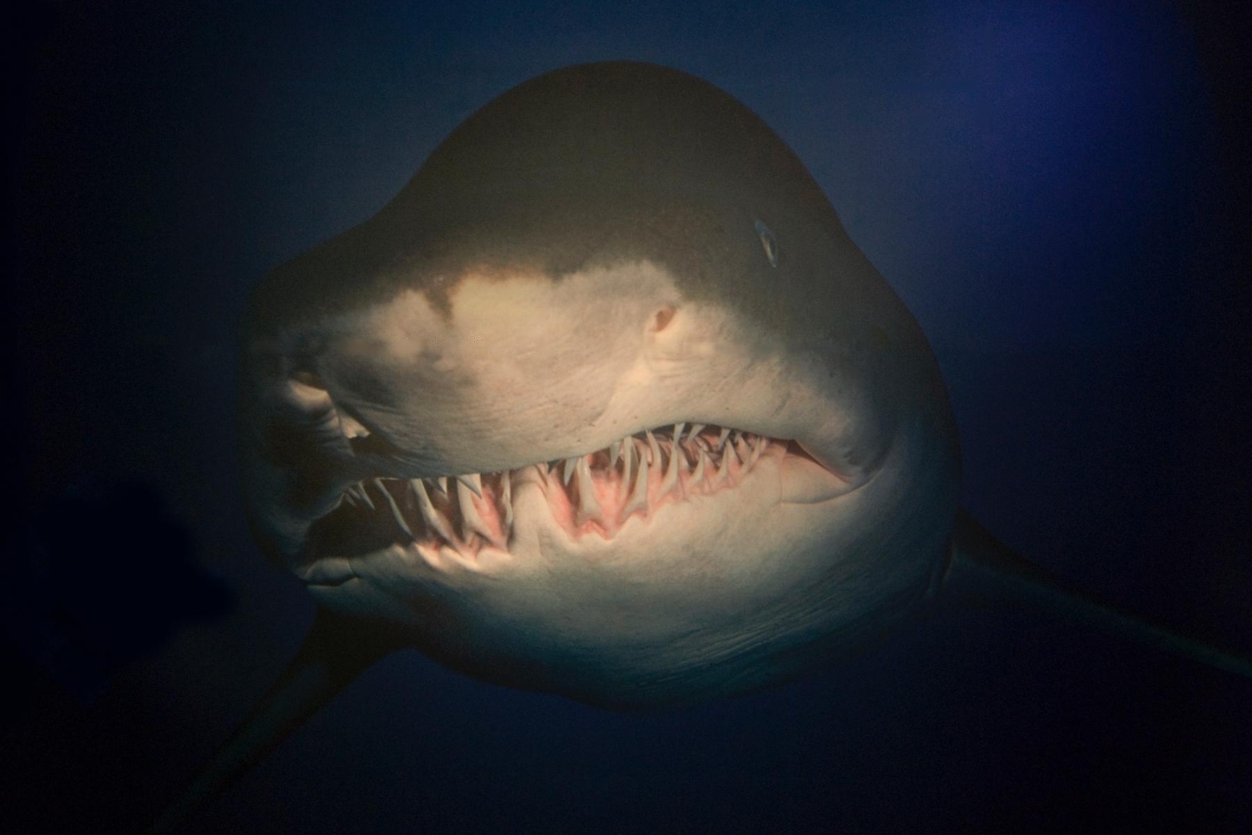 Aquarium close. photography, - stylianosbeta | ello