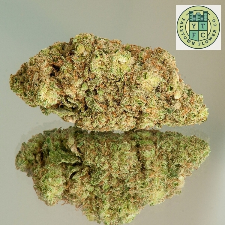 Moby Dick, potent cross Haze Wh - ytfc | ello
