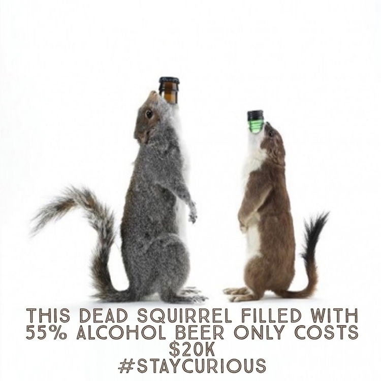 Dead Squirrel Filled 55% Alcoho - curionic | ello
