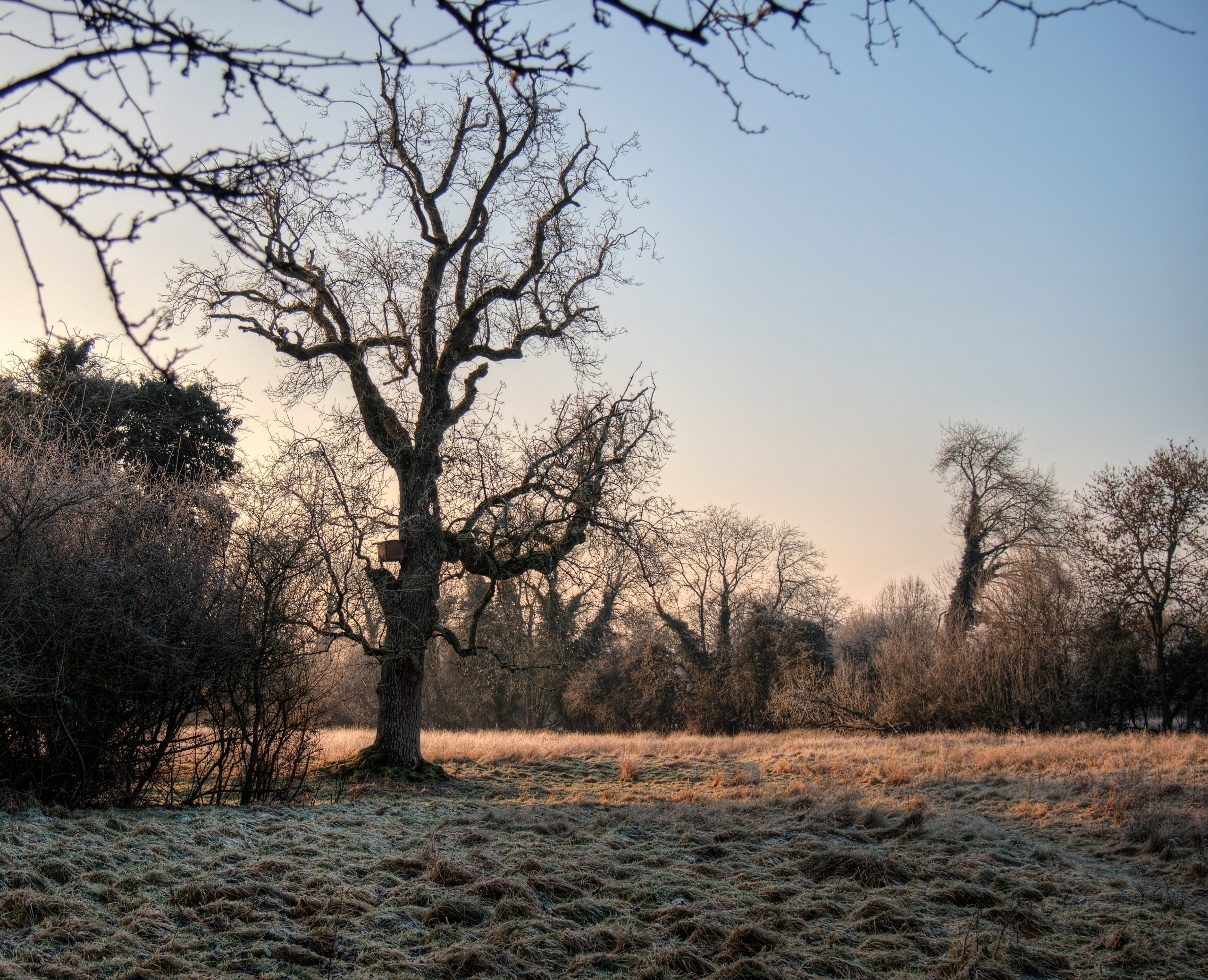 Frosty Tree tree frosty field W - neilhoward | ello