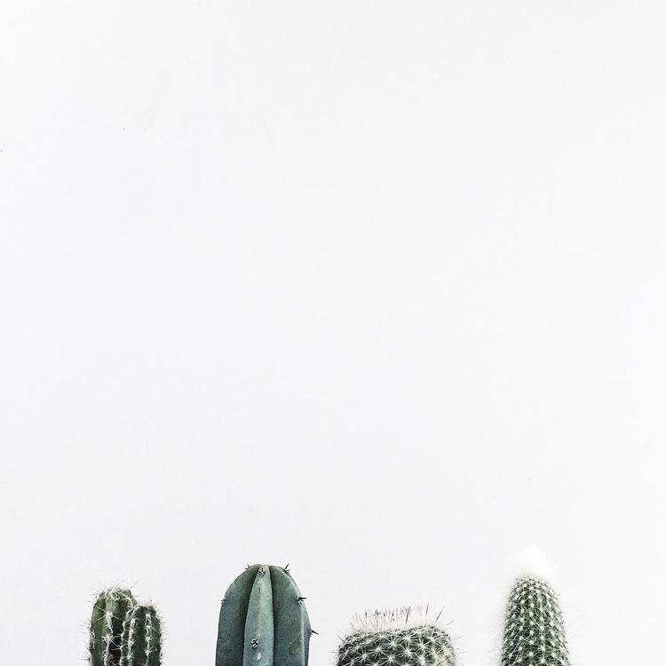 cactuses survive 15 300 years,  - minimalismlife | ello