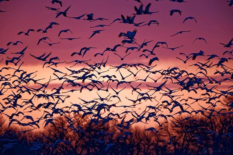 Sandhill Cranes Coming! home st - melyssastmichael | ello