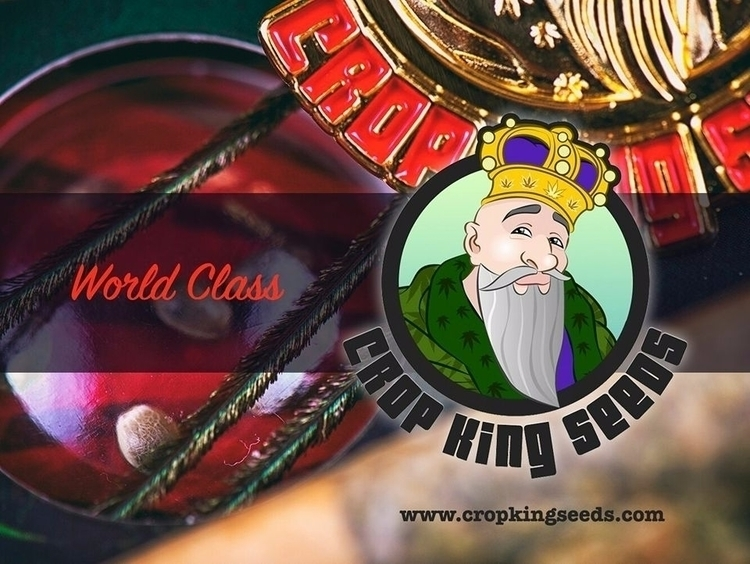 World Class Cannabis Seeds - cropkingseeds   ello