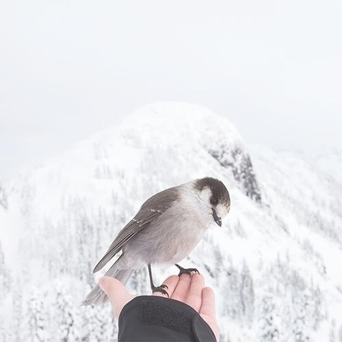 Empty hand / Zen — bird paradis - kashyapi   ello