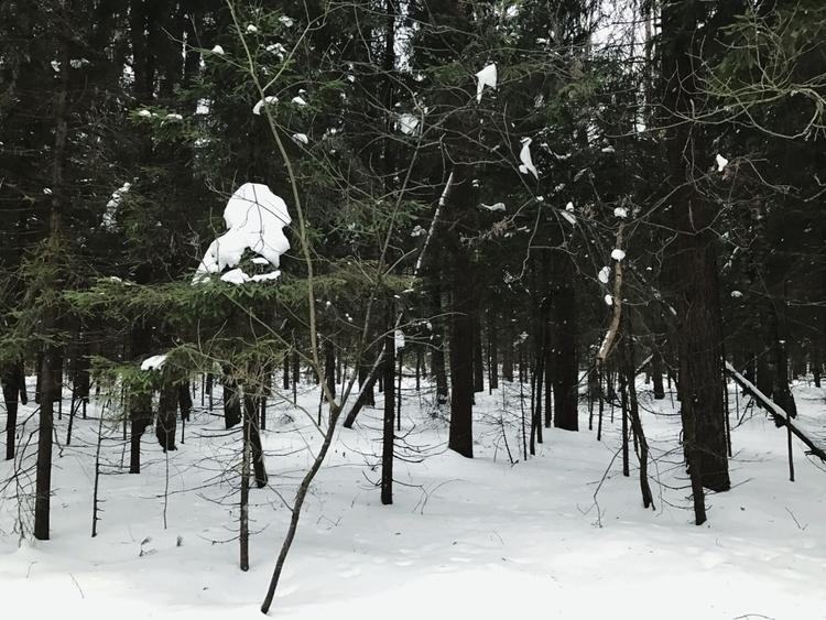 Walked woods mom yesterday. qui - kseniaanske   ello