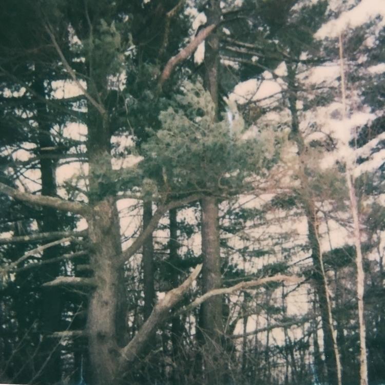 green - Polaroid, ElloPhotography - jkalamarz | ello