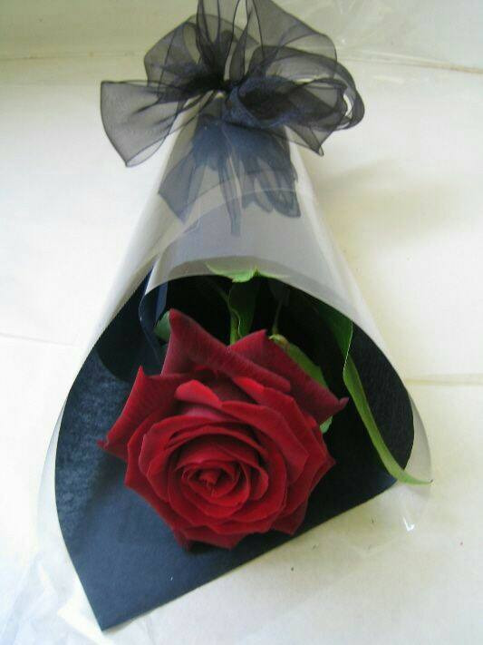 rose dozen.--Wendy Craig - lolosbri | ello
