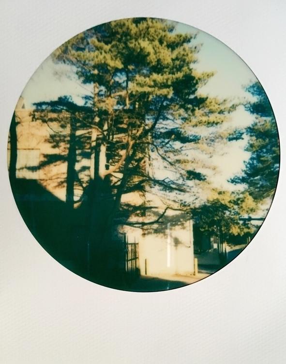 middleground - Polaroid, ElloPhotography - jkalamarz | ello