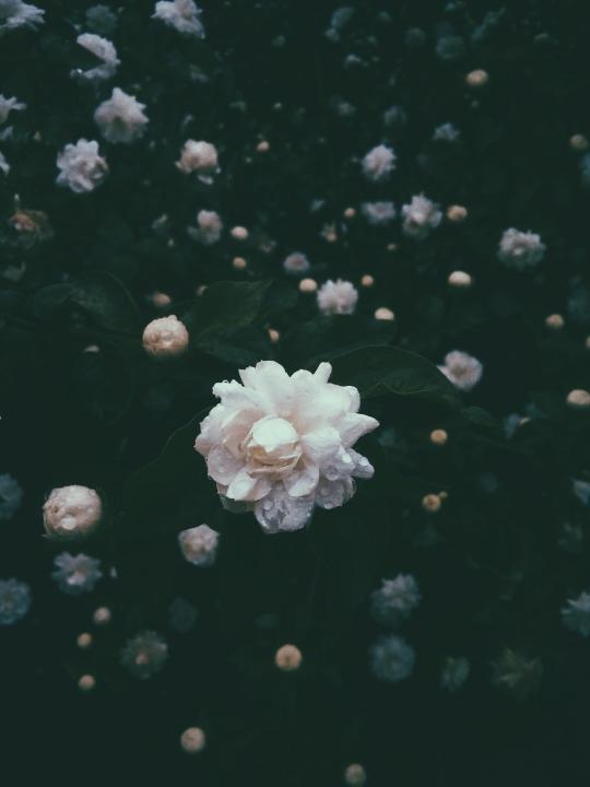 FLOWERS IG - italo_dantass - photography - italo_ | ello