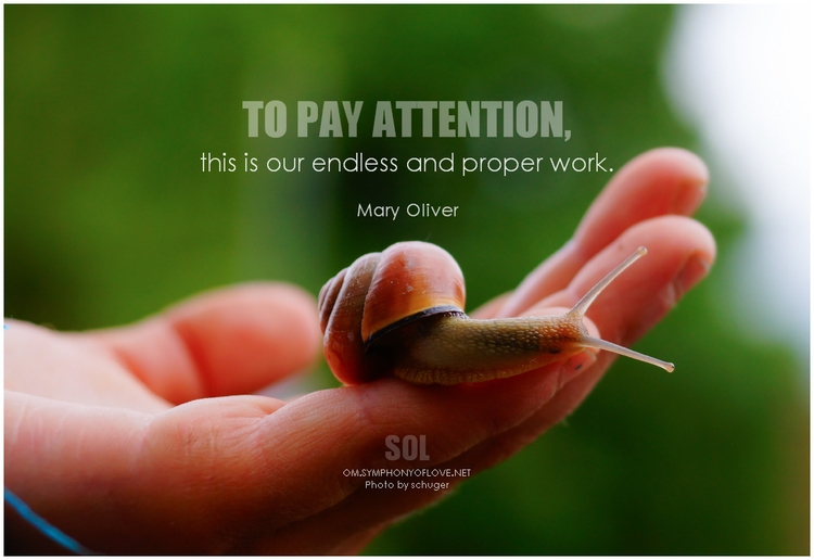 picture quotes Moment pay atten - symphonyoflove | ello
