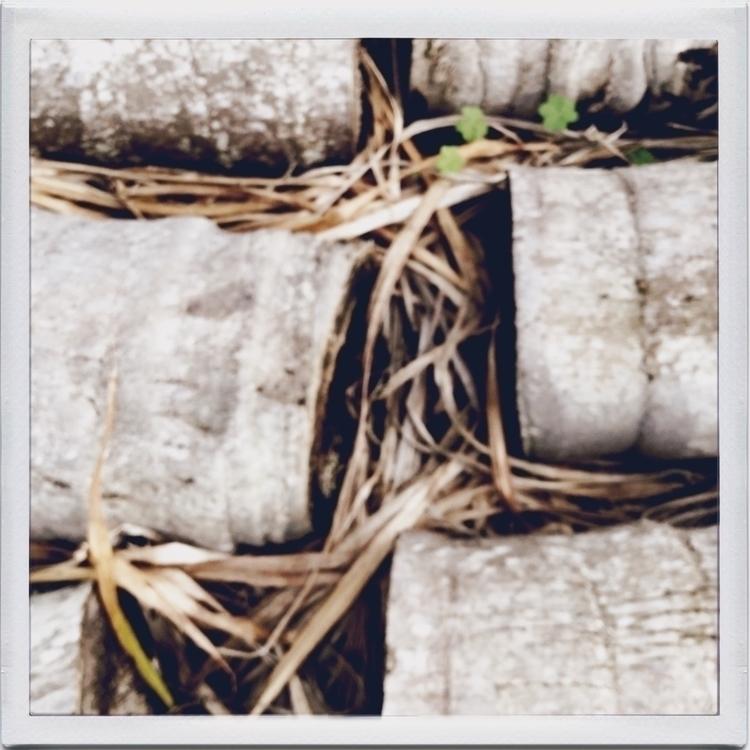 Logs Garden Apps - mikefl99, ello - mikefl99 | ello