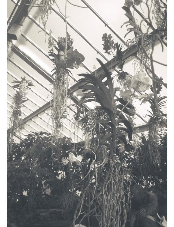 Kew Garden Orchidaceae // Londo - nitaboni   ello