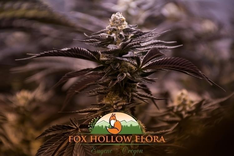 Forum Cut GSC - foxhollowflora, oregon - foxhollowflora | ello