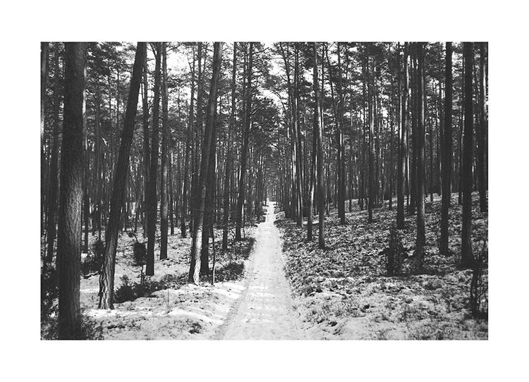trippin - photography, nature, woods - richvein   ello