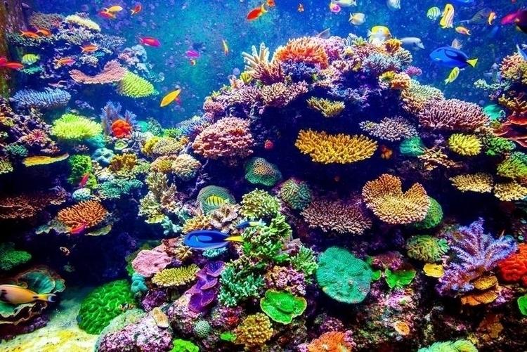 3D-printed coral save reefs? Ja - bonniegrrl   ello