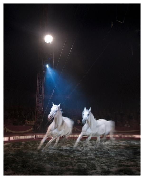 Circus II - photography, circus - lars_fotograf | ello