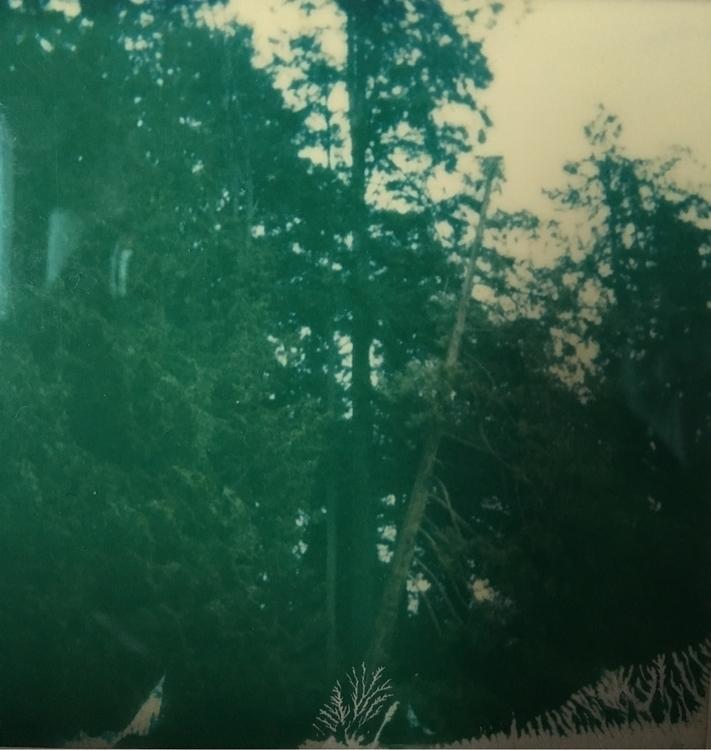 Stanley Park, II - Polaroid, photography - jkalamarz   ello