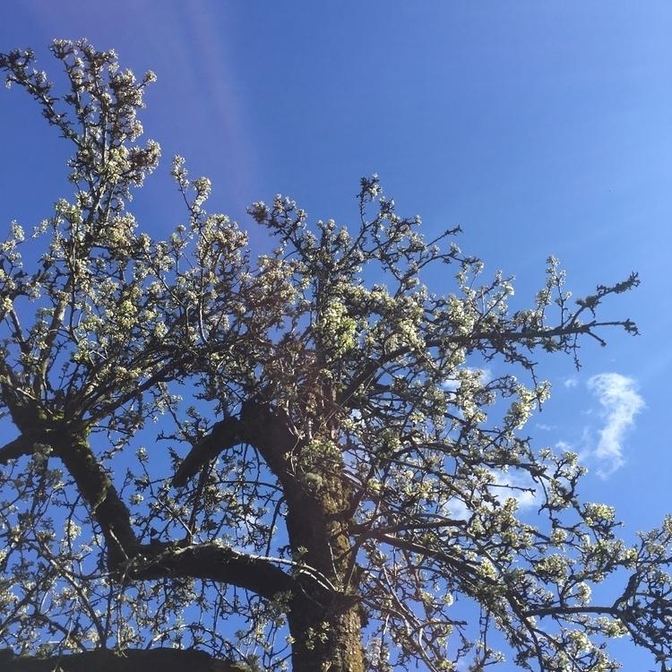 Signs spring - brettchalupa | ello