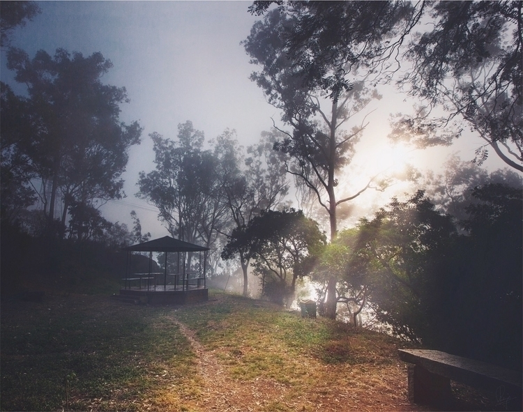 Glowing - trees., morning, light - riazhassan | ello