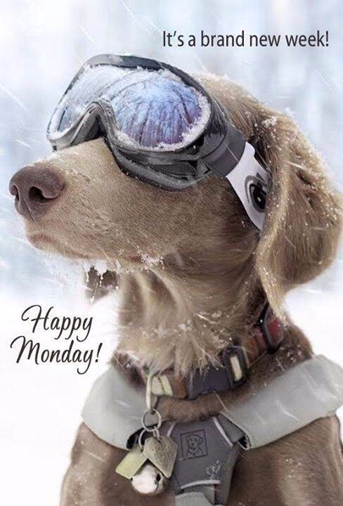 Happy Monday! world stuck Halli - hallicj   ello
