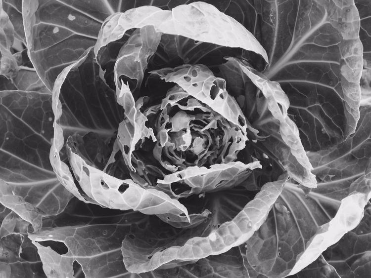 Gardener Tonight, slice middle - nesbitandgibley | ello