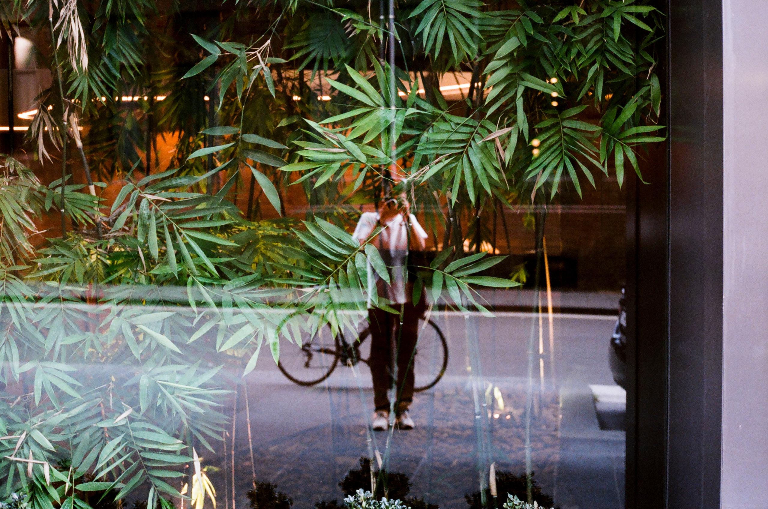 portrait plants - okblake | ello