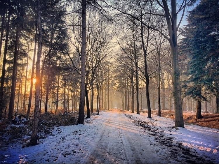 Love - nature, netherlands, utrecht - boswachtertim | ello