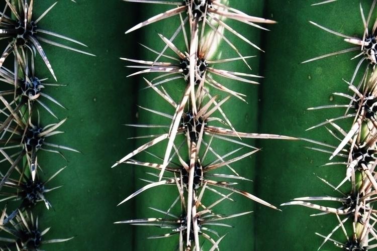 Cactus Pricks - nikond5500, arizona - theopie | ello