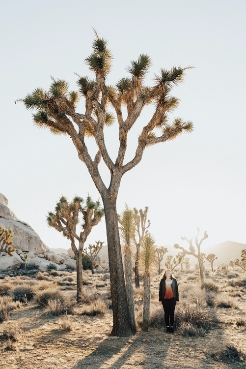Joshua Tree - nationalpark, joshuatree - neongrounds | ello