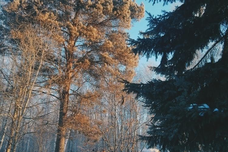 siberia, winter, forest, explore - nnoe_telo | ello