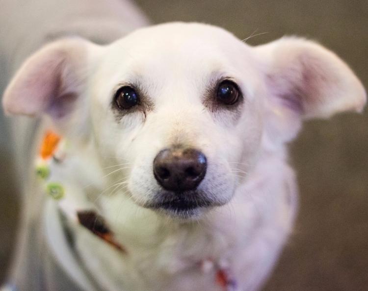 Beautiful Dawg - dog, portrait, isthisphotography - dinkie | ello