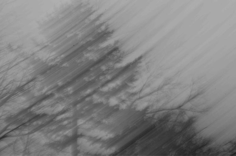 tree_magic, tree_captures, fingerprintofgod - bryanchapman | ello