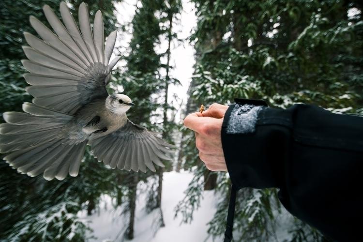 Free bird. Colorado. 2.26.17 - thinktomake | ello