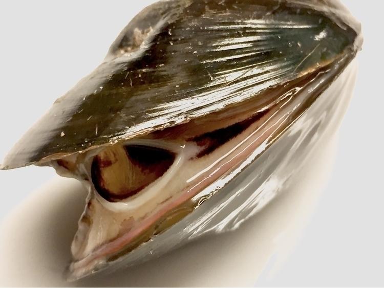 mussels - elilch | ello