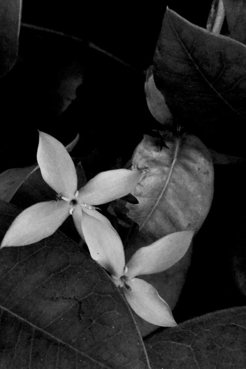 Flowers Night Apps - mikefl99, ello - mikefl99 | ello