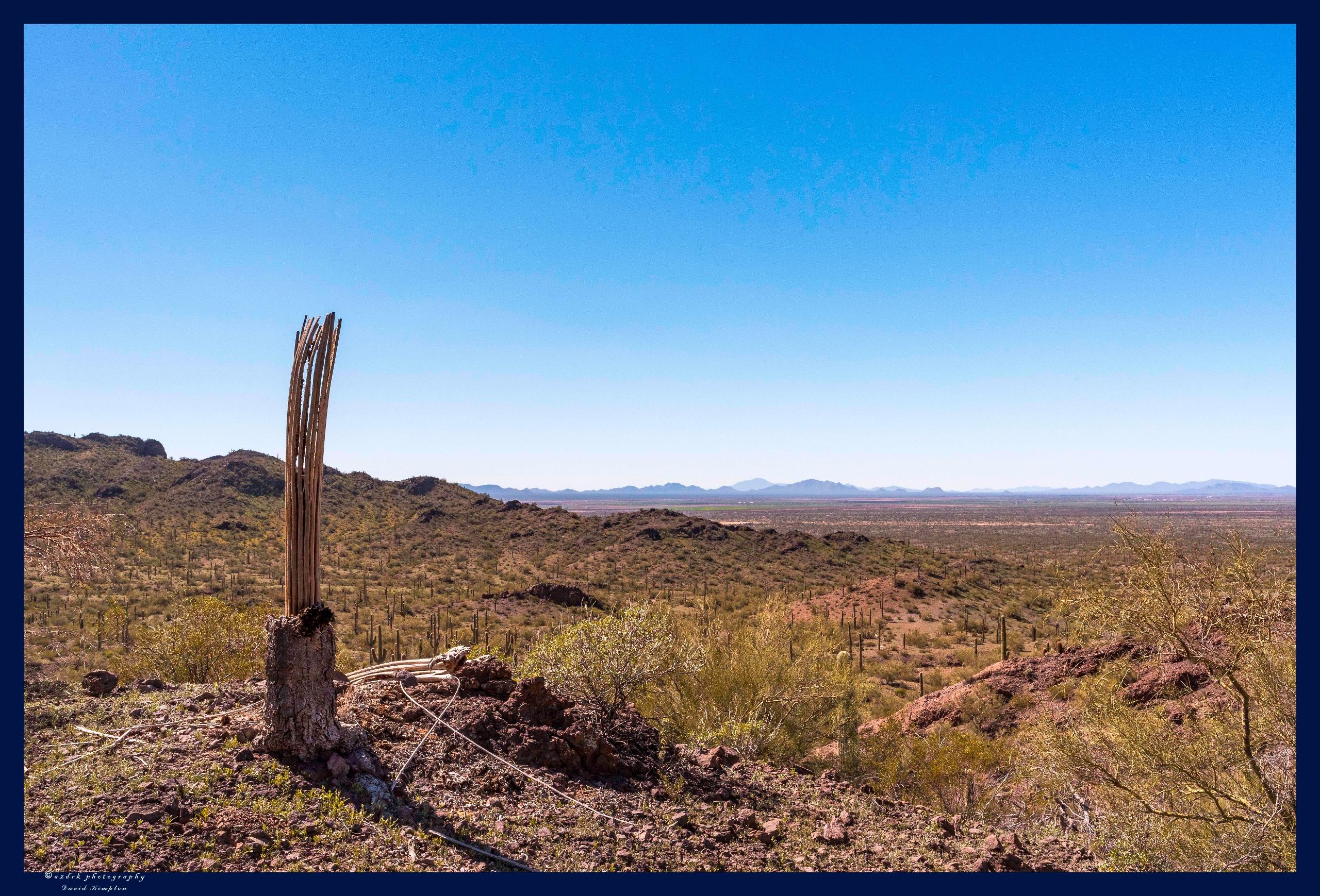 Bones, 2017 bones Saguaro, refl - azdrk   ello
