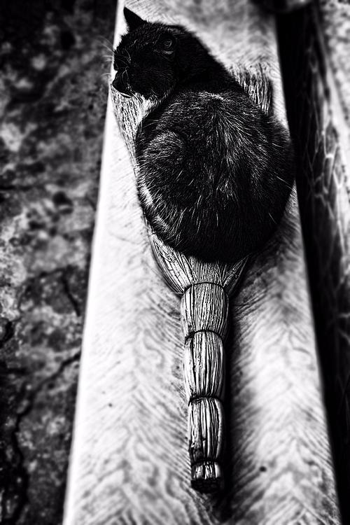 WIZ - cat, animal, blackandwhite - cornelgin | ello