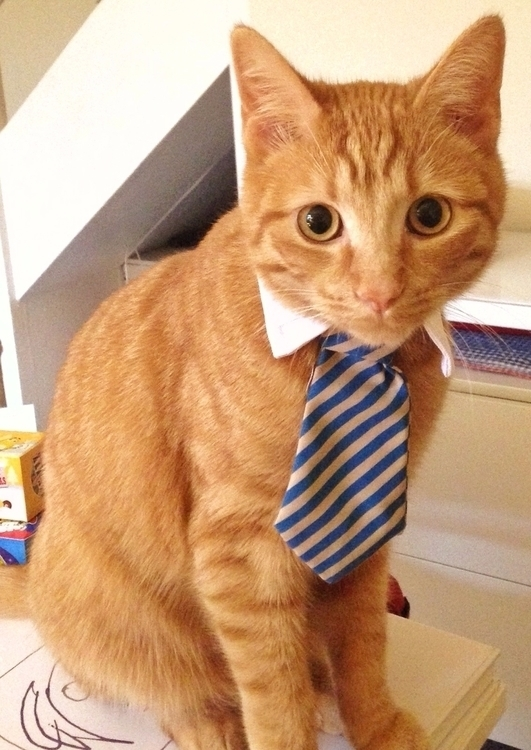 photography, fashion, cat, tie - clemconti | ello