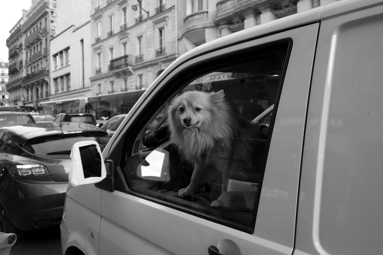 [PARIS -- Le de la Rue Lafayett - petit_louis   ello