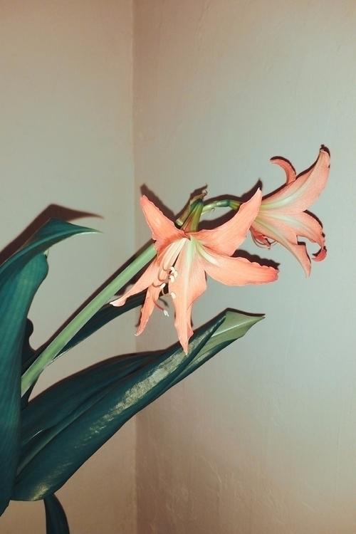 flowers, blossom, plant, leaves - andreigrigorev   ello