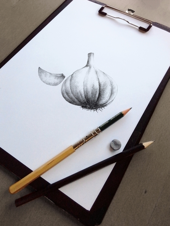 Garlic illustration illustrated - nantia | ello