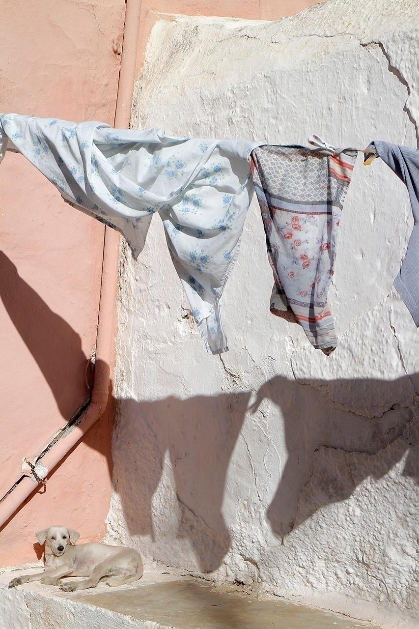 laundry, dog, streetphotography - efimik   ello